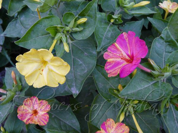 Name Of Flowers In Tamil Part I You